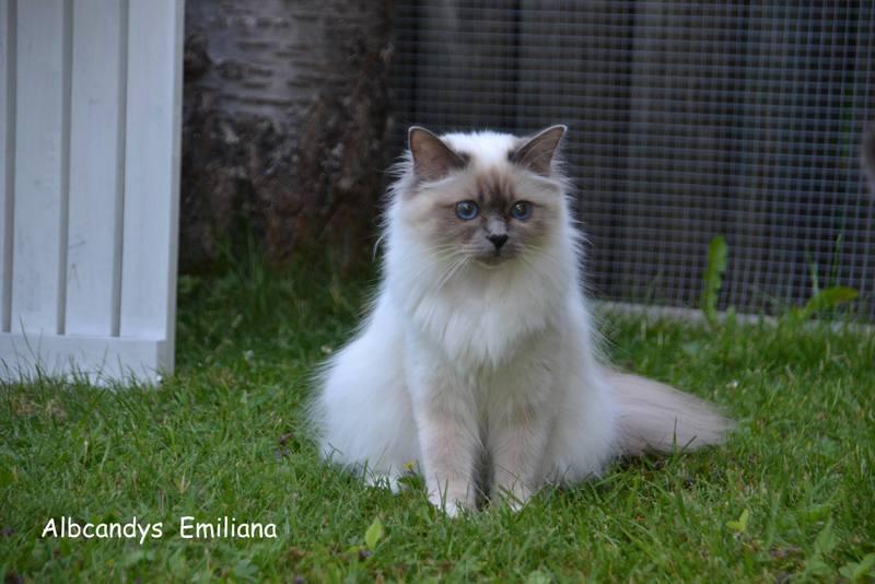 Emiliana 1